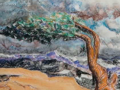 Jeffrey pinetree in California