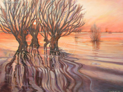 Water willows